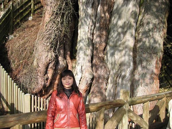 「鹿林神木」,第二大神木,約2,700歲
