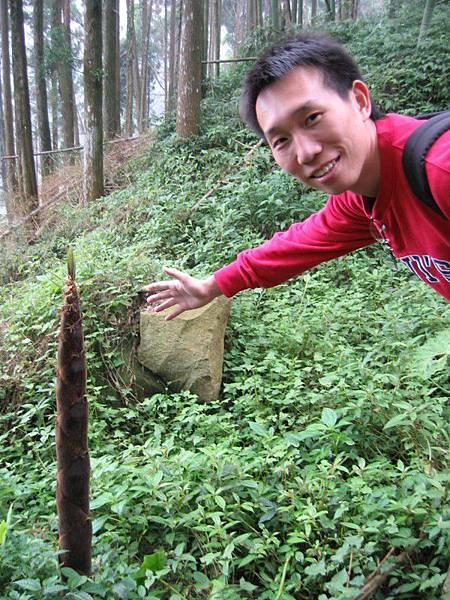 還沒長大的竹子