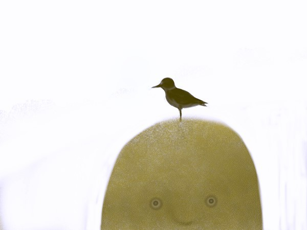 鳥_sample.jpg