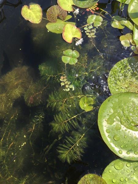 water26.jpg