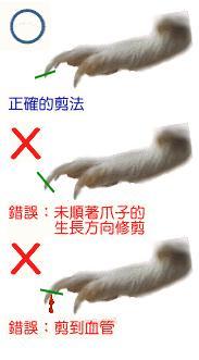 修剪天竺鼠爪子的方法