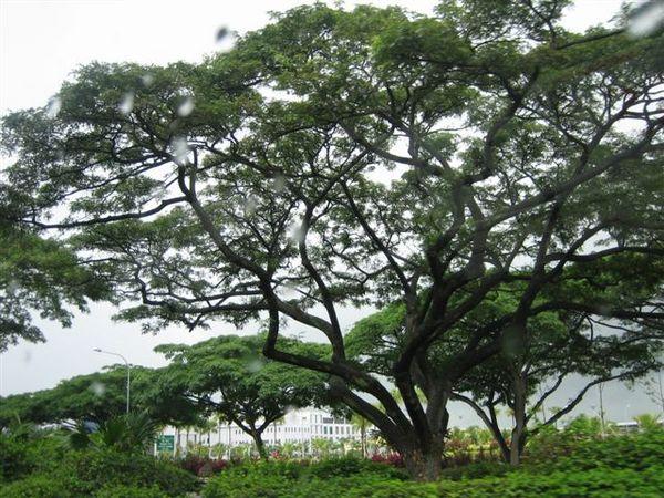 新加坡 313.jpg