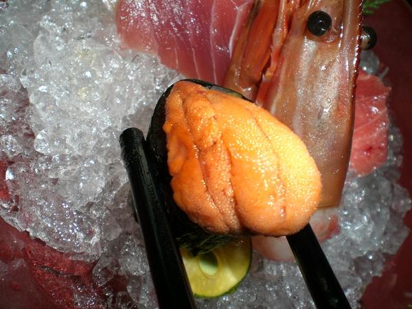 楓套餐-海膽~~~~~