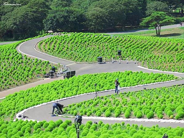 20140818日立海濱公園 (6).JPG