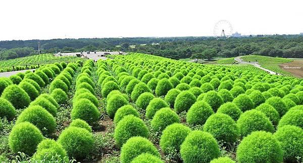 20140818日立海濱公園 (7).JPG