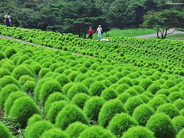 20140818日立海濱公園 (9).JPG