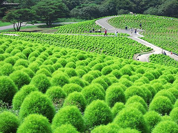 20140818日立海濱公園 (8).JPG