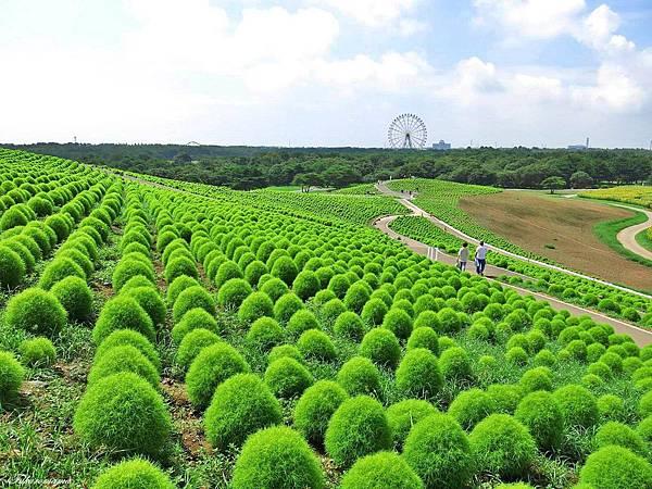 20140818日立海濱公園 (11).JPG