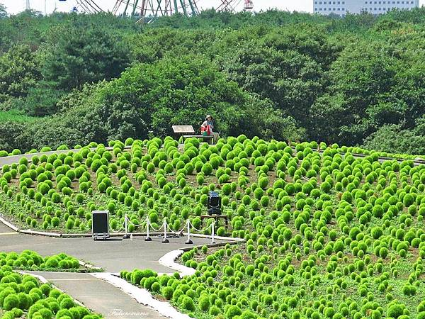 20140818日立海濱公園 (14).JPG