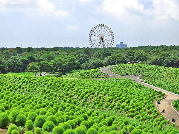 20140818日立海濱公園 (15).JPG