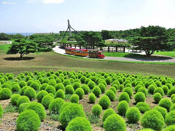 20140818日立海濱公園 (27).JPG