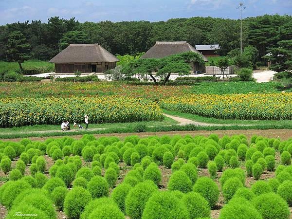 20140818日立海濱公園 (33).JPG