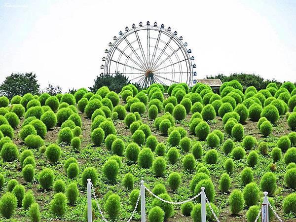 20140818日立海濱公園 (45).JPG
