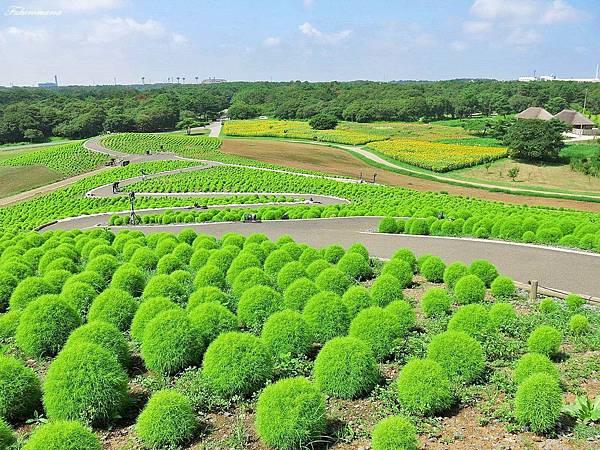 20140818日立海濱公園 (53).JPG