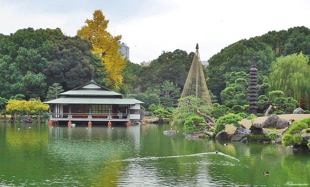 20121130清澄庭園 (2).JPG