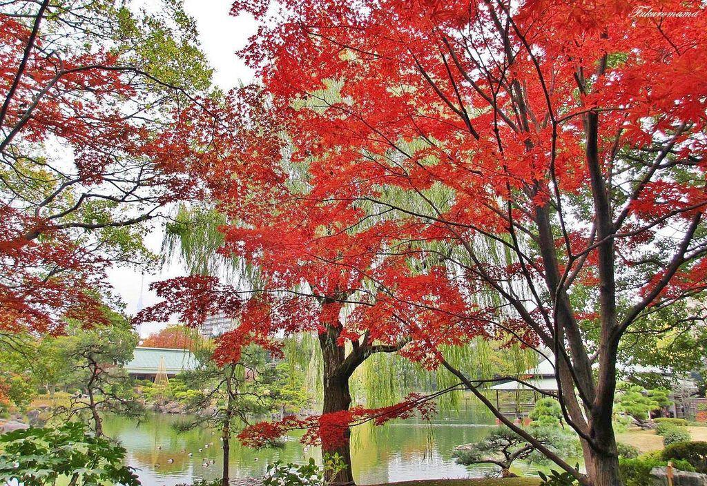 20121130清澄庭園.JPG