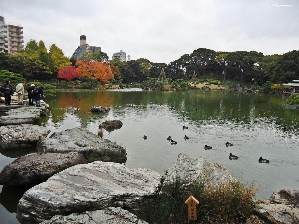 20121130清澄庭園 (4).JPG