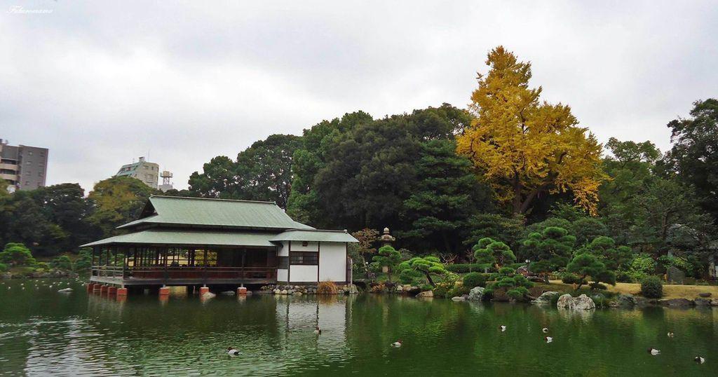 20121130清澄庭園 (6).JPG