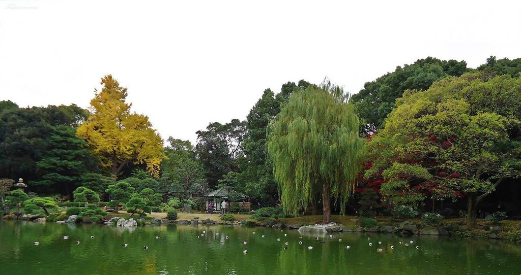 20121130清澄庭園 (7).JPG