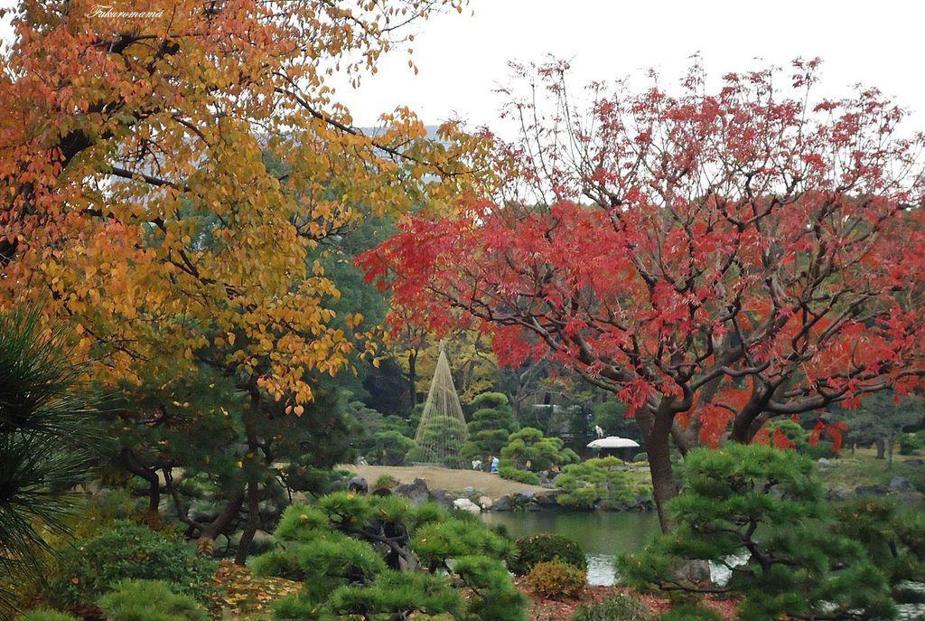 20121130清澄庭園 (8).JPG
