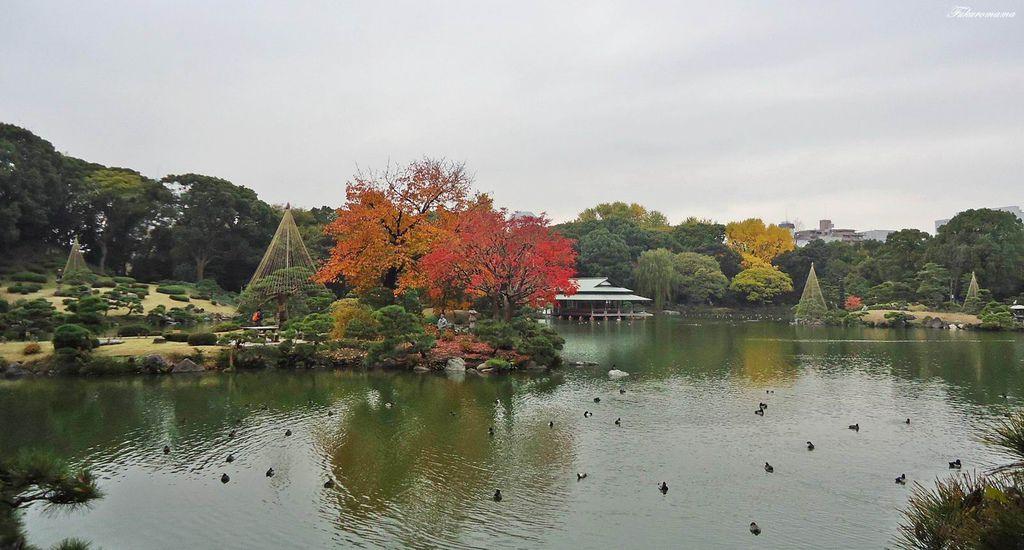 20121130清澄庭園 (9).JPG