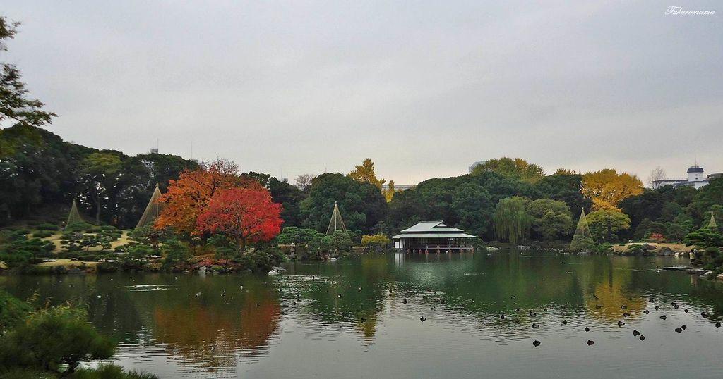 20121130清澄庭園 (10).JPG