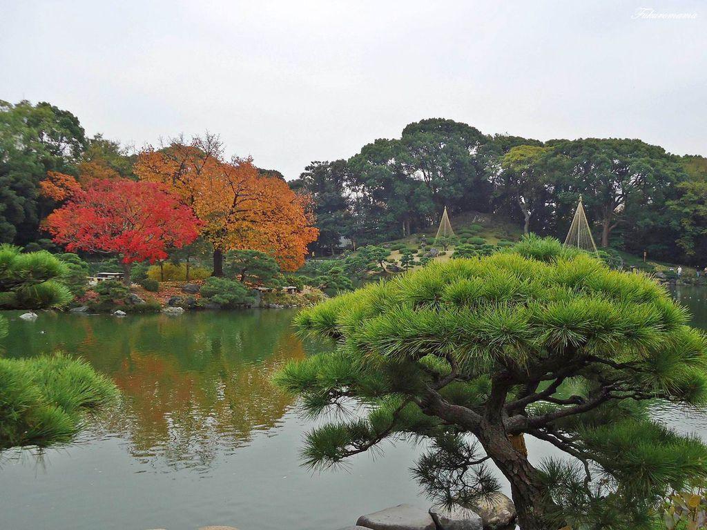 20121130清澄庭園 (11).JPG