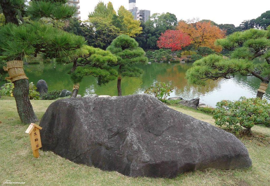 20121130清澄庭園 (13).JPG