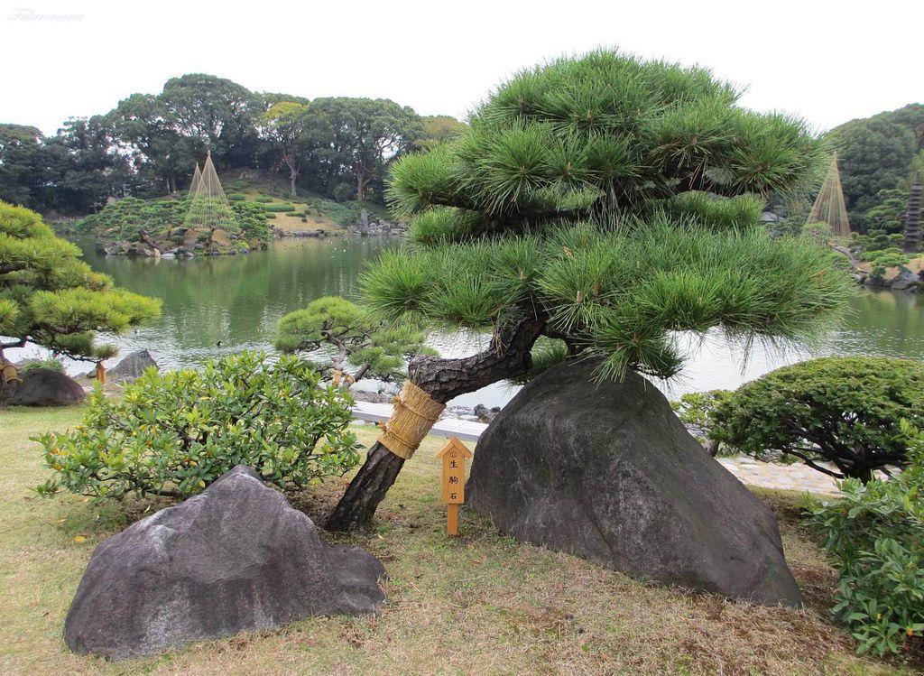 20121130清澄庭園 (18).JPG