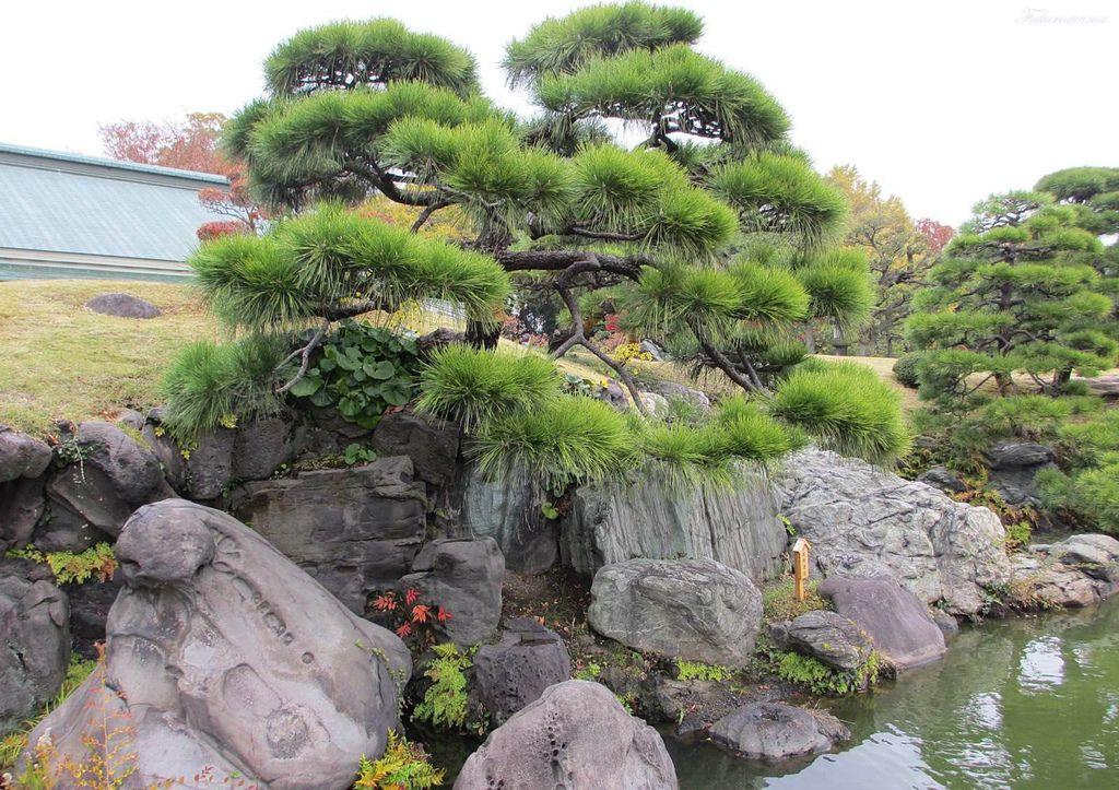 20121130清澄庭園 (19).JPG