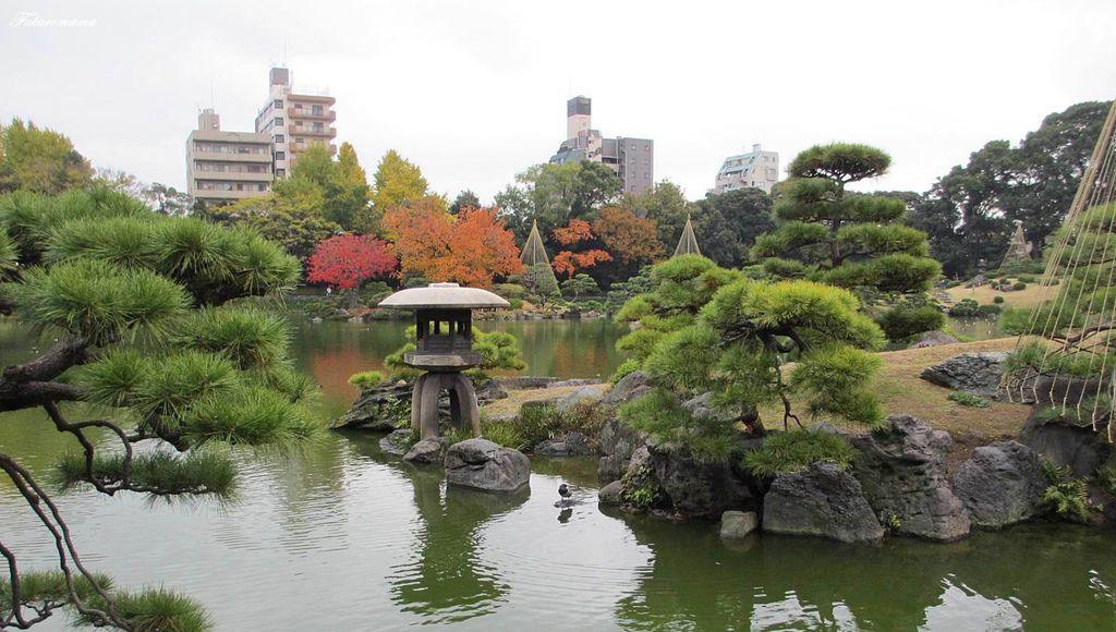 20121130清澄庭園 (22).JPG