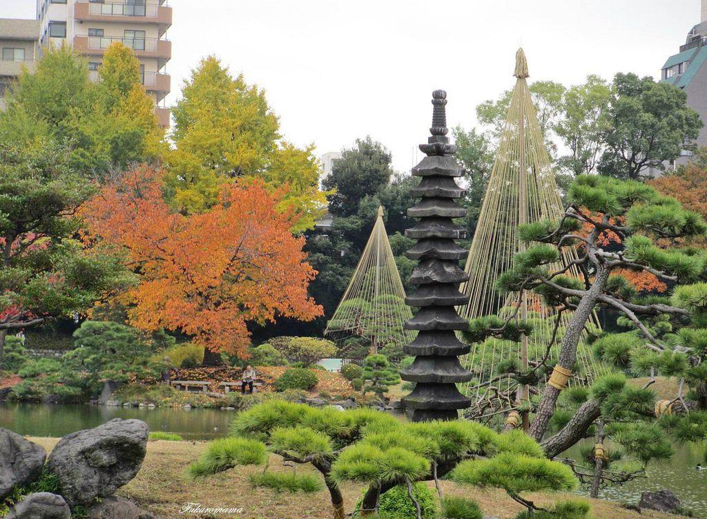 20121130清澄庭園 (26).JPG