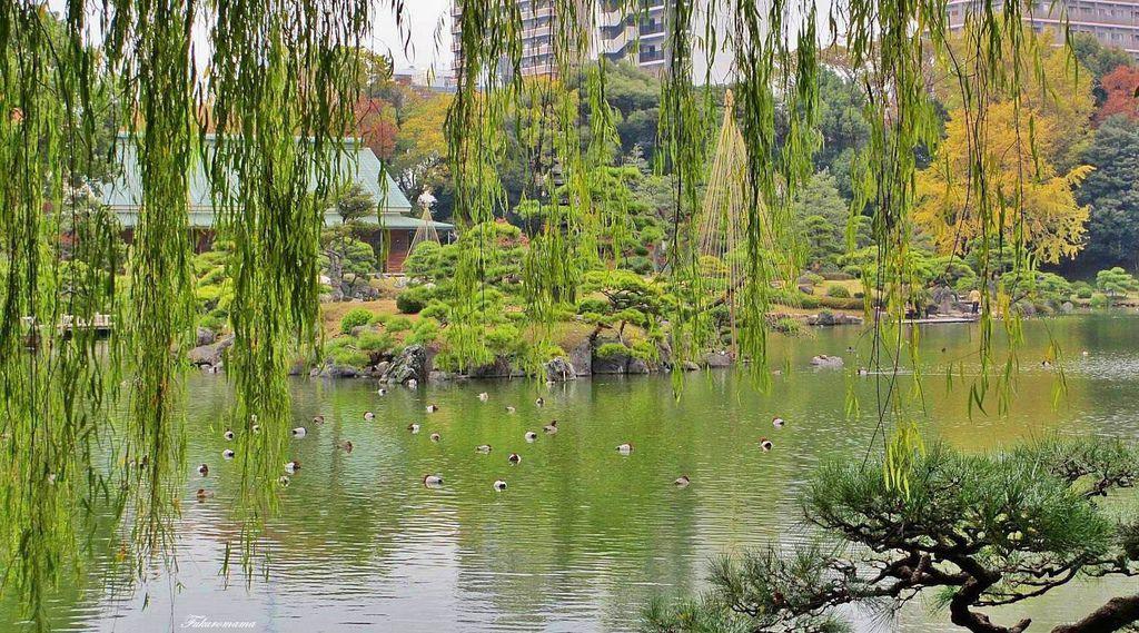 20121130清澄庭園 (30).JPG