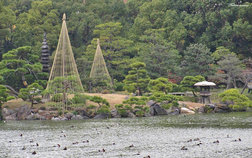 20121130清澄庭園 (31).JPG