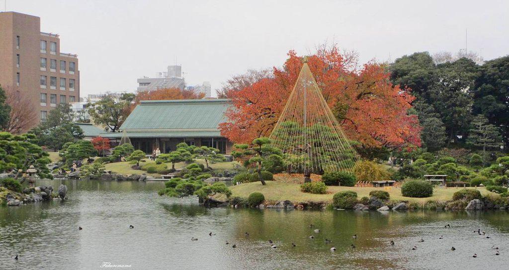 20121130清澄庭園 (32).JPG