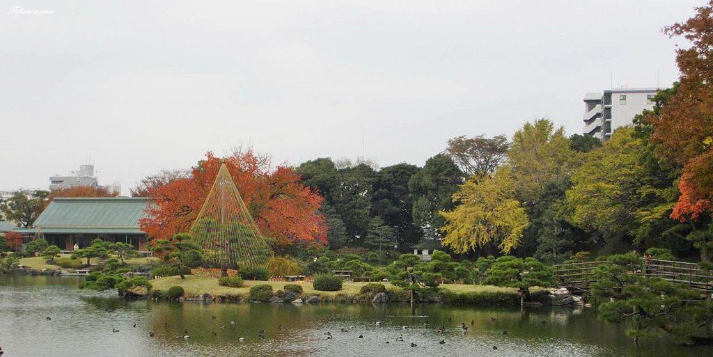 20121130清澄庭園 (33).JPG