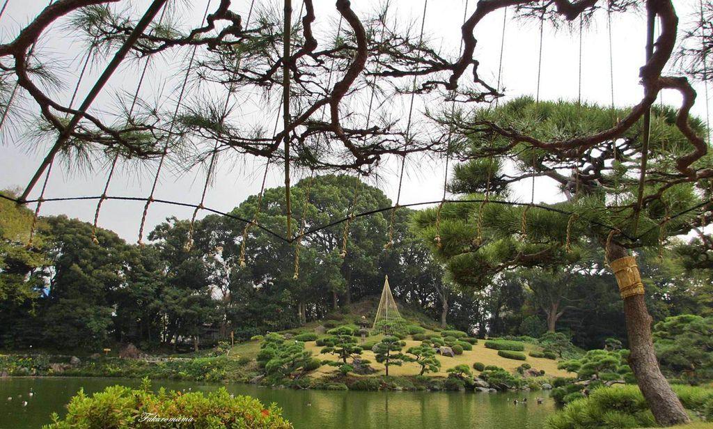 20121130清澄庭園 (34).JPG