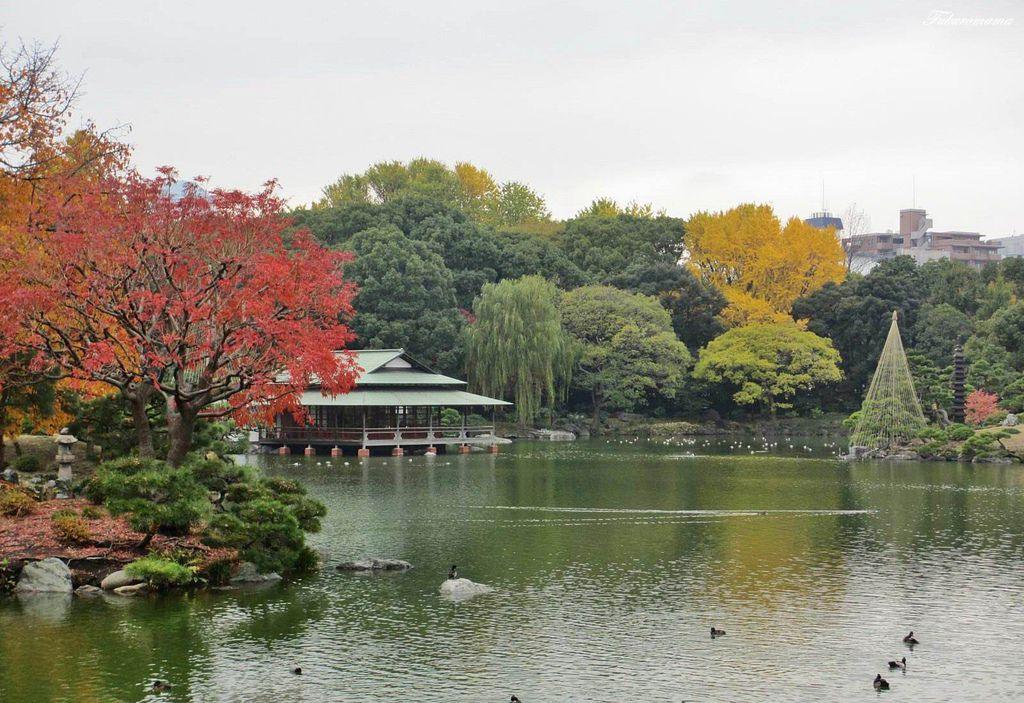 20121130清澄庭園 (37).JPG