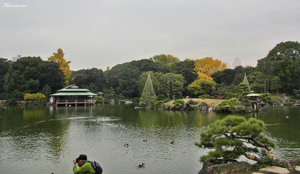 20121130清澄庭園 (38).JPG