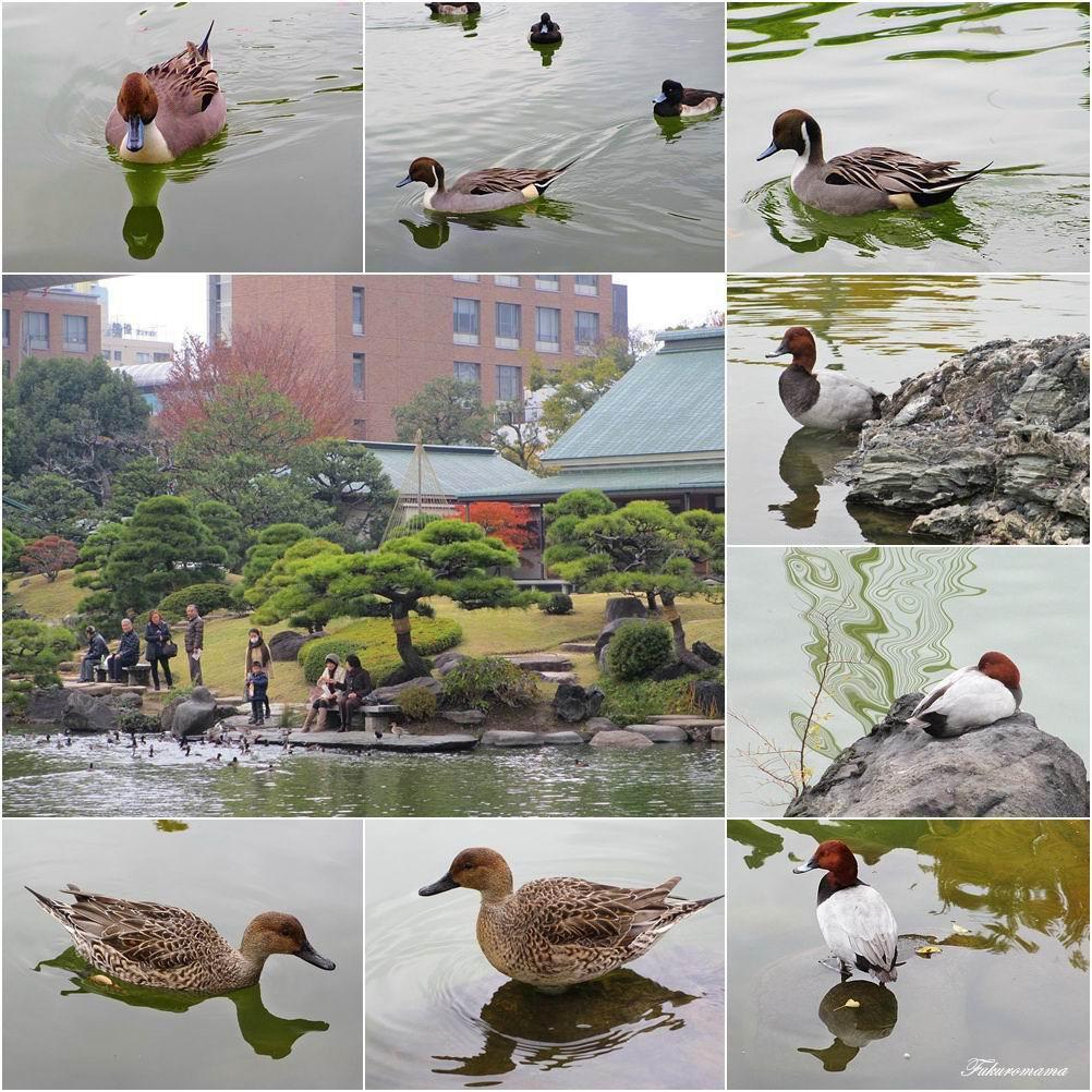 20121130清澄庭園 (48).jpg