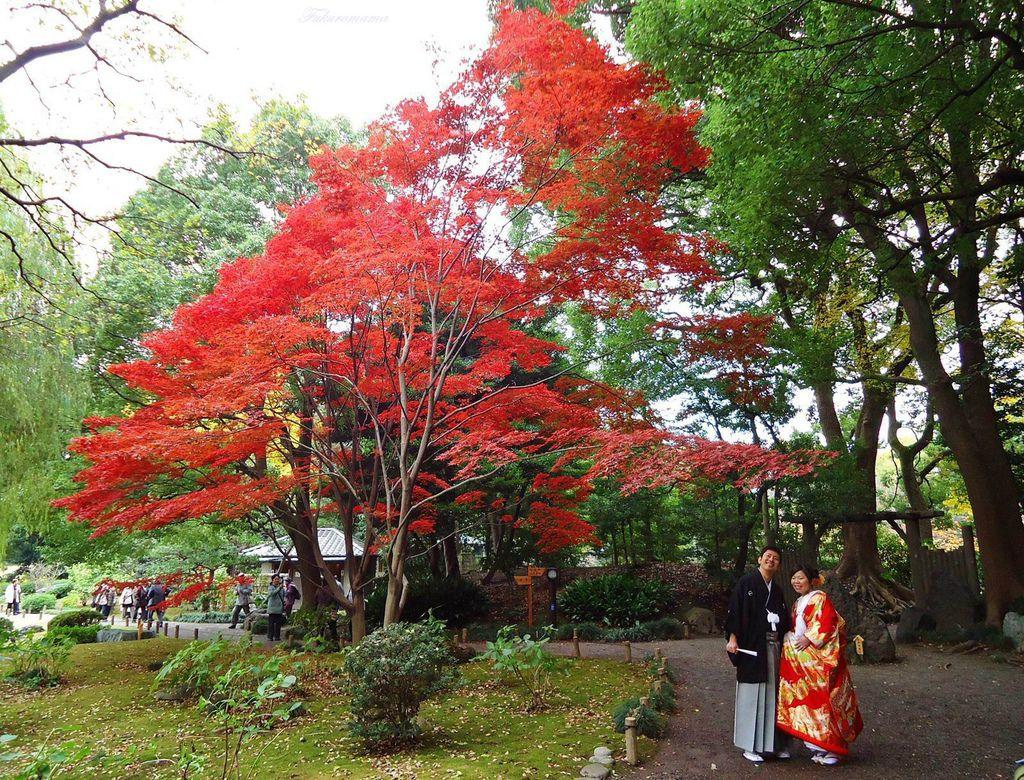 20121130清澄庭園 (50).JPG