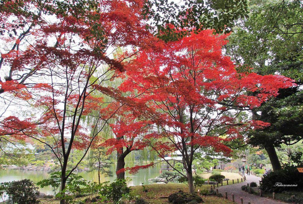 20121130清澄庭園 (51).JPG