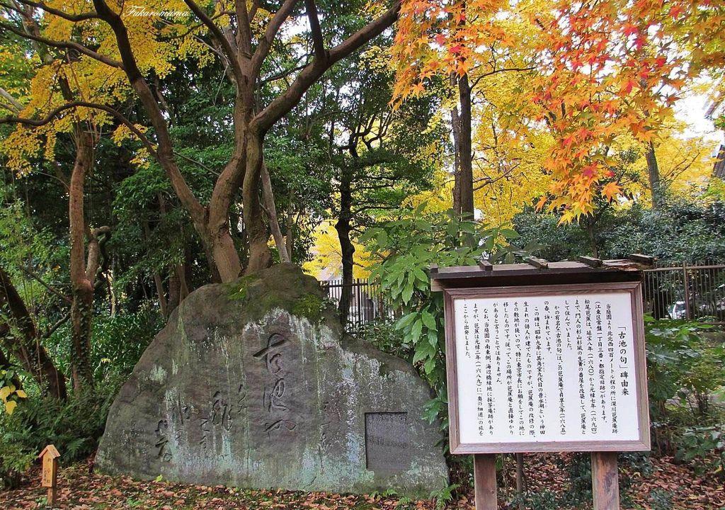 20121130清澄庭園 (56).JPG
