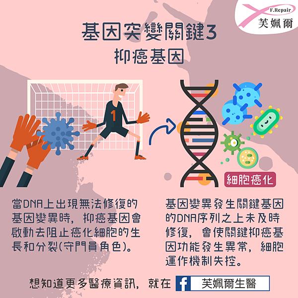 fb_po文圖(癌症是基因還是遺傳04-2).png