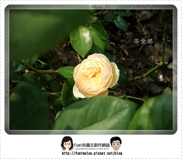 花朵物語-安全感