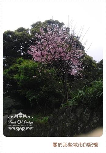 2012.03 櫻花季