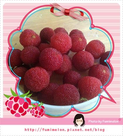 101.5.19 樹莓(楊梅)