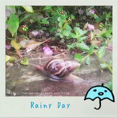 101.6.3 Rainy Day