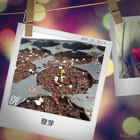 R&F生活小劇場 ♥ 新手廚娘記錄(0430)
