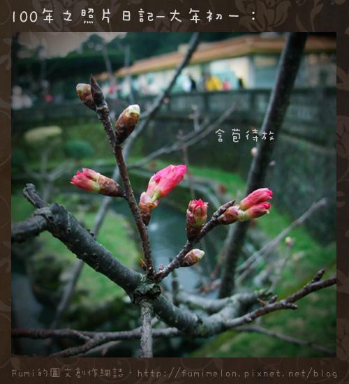 04-含苞待放的櫻花